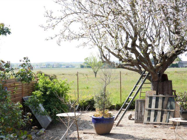 Maison Les Rosiers sur Loire exterieur e-bis-immobilier